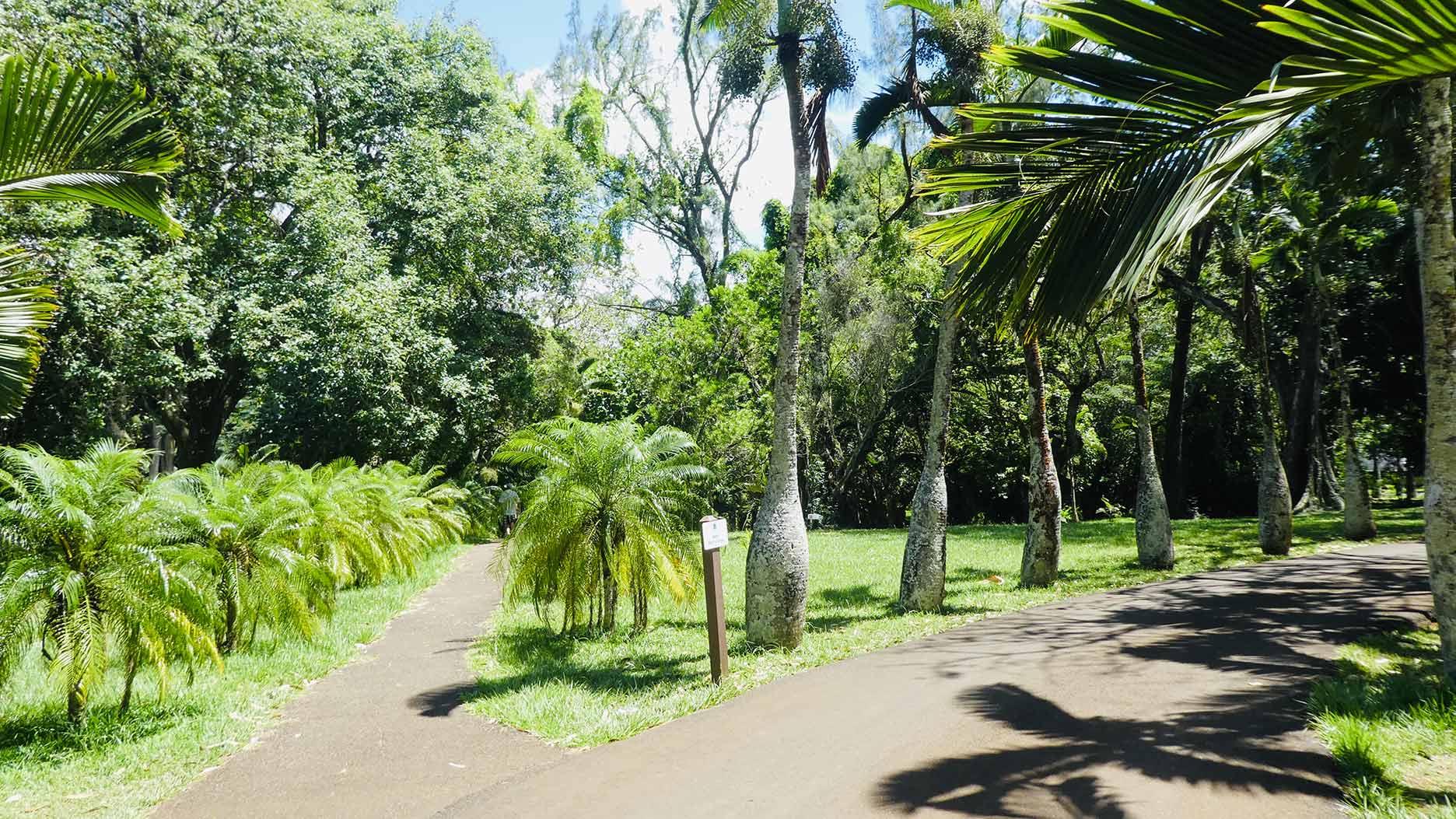 jardin de pamplemousses à l'ile maurice