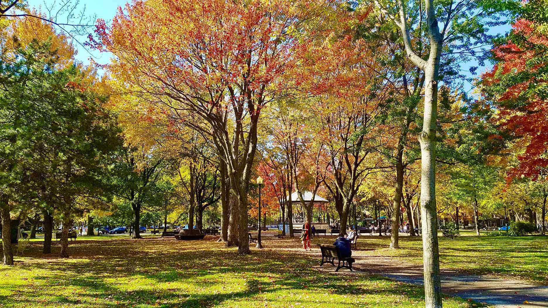 parc à l'automne au québec
