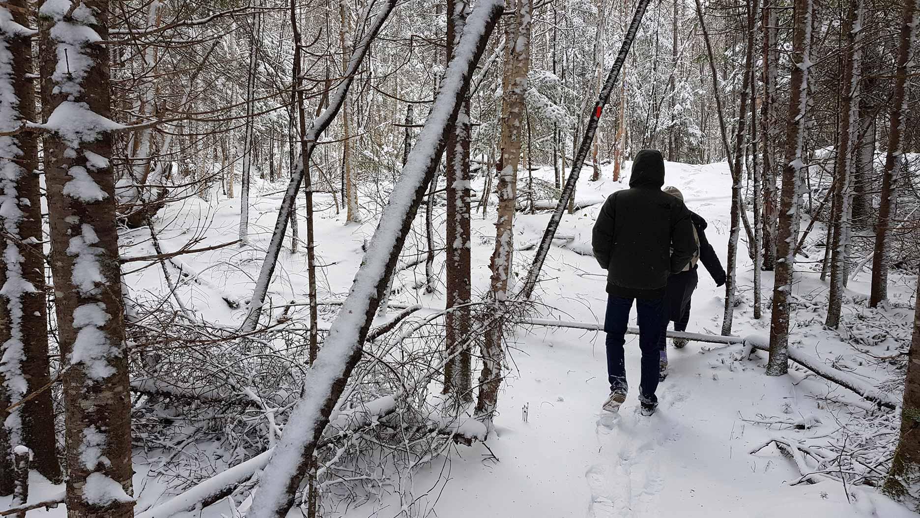 randonner dans la neige en hiver au québec