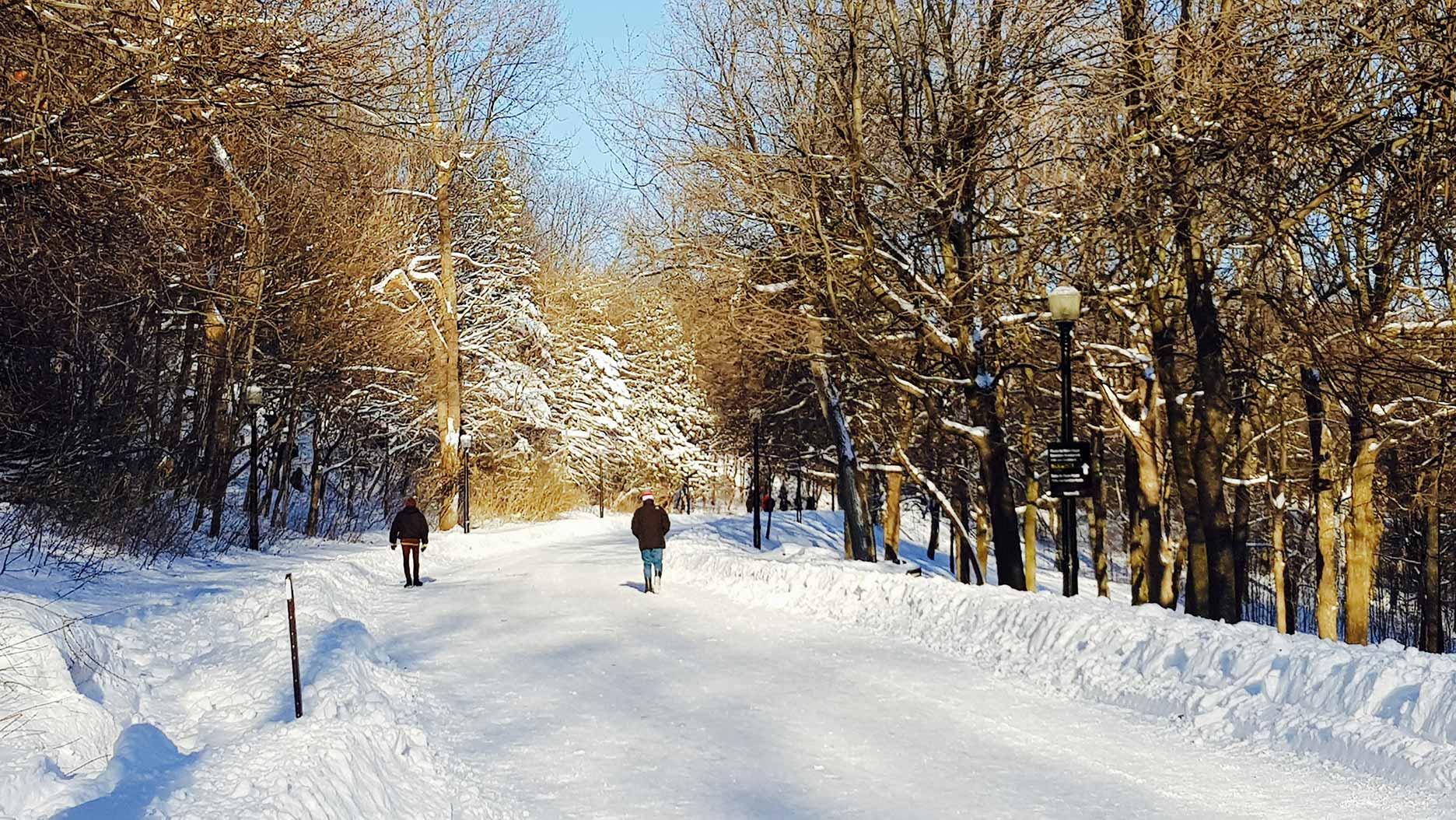 chemin enneigé sur le mont royal à montreal