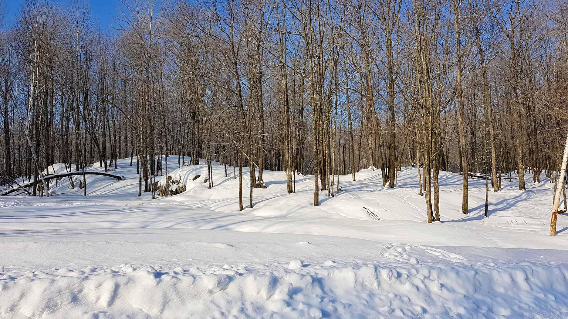 vallée enneigée et arbres en hiver