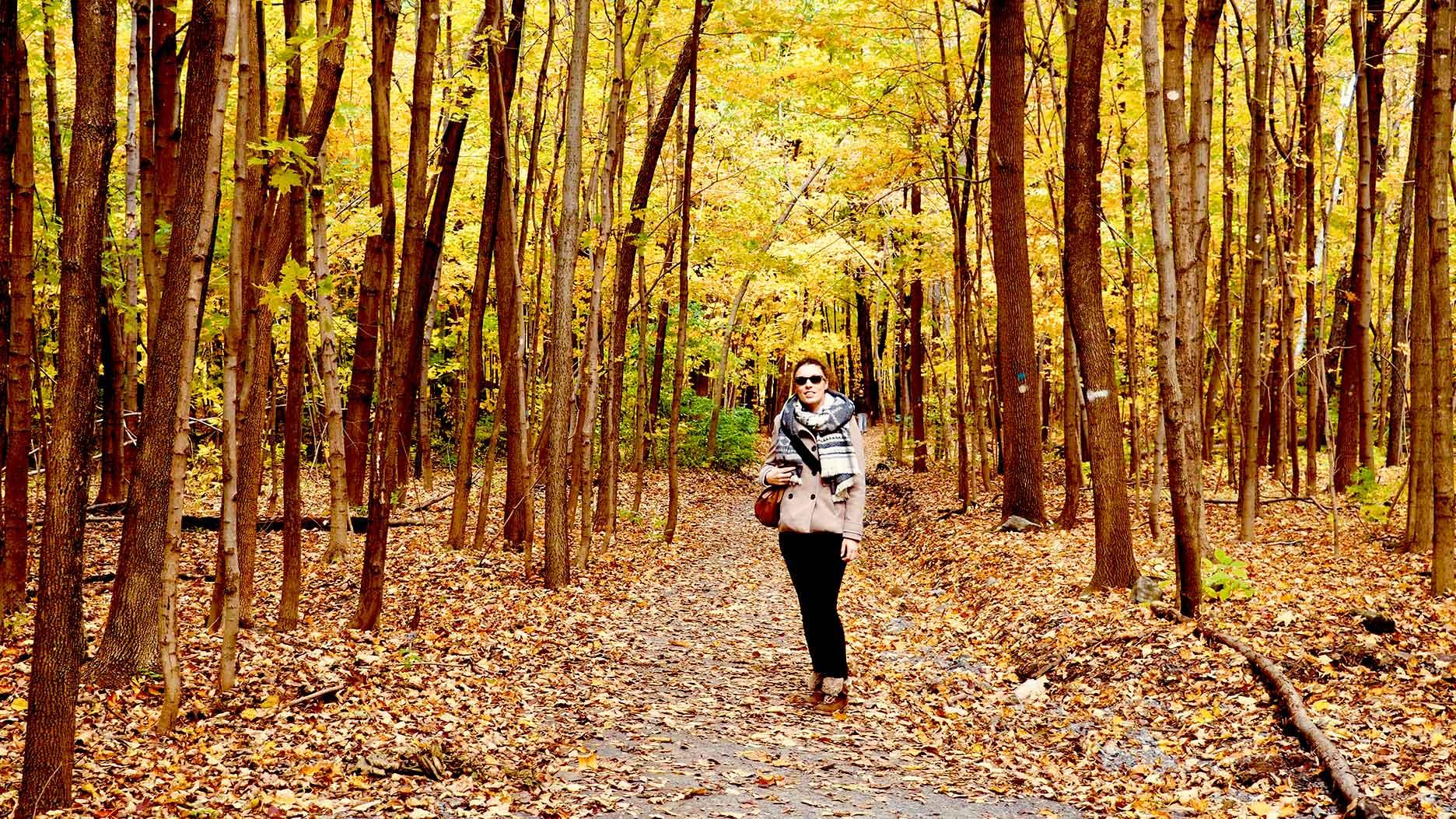 parc mont royal à montreal pendant l'automne
